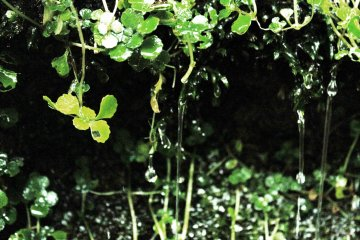 <p>The plant life is green and lush &nbsp;</p>