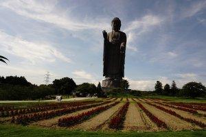 Taman yang mengelilingi area Daibutsu di musim panas ketika bunga musiman mulai bermekaran