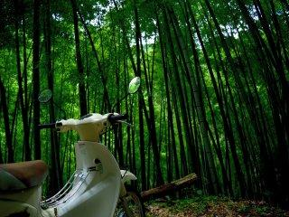 Avançamos através de um estreito caminho pela floresta