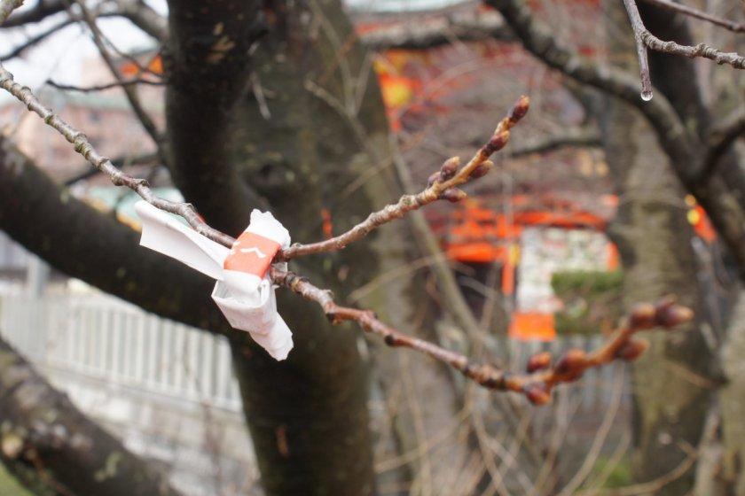 Омикудзи, завязанная на дереве у храма