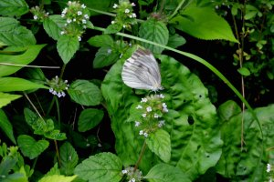 A butterfly sips nectar from flowers near the waterfall