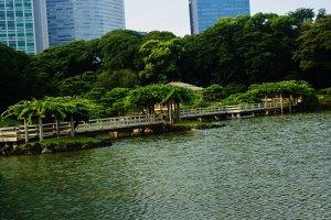 """Le pont de """"Hinoki"""" (cèdre japonais)"""