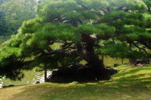 La verdure magnifique des jardins Hamarikyu
