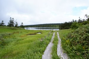 A hiking trail leads through the marshland near Onuma Pond
