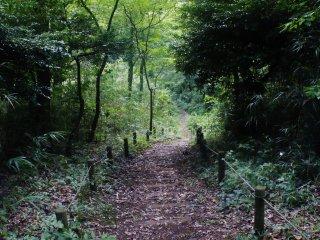 Nozuta Kôen : une petite balade dans les bois