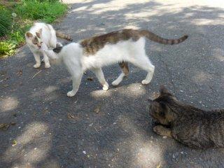 Hai đứa chúng nó đánh nhau để giải trí ~ Mu-ha-ha meow!