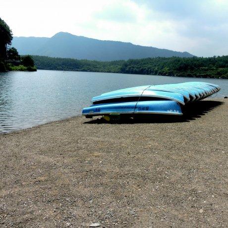 西湖で夏を楽しむ