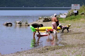 <p>Собаки в спасательных жилетах</p>