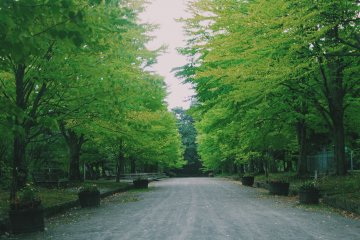 <p>Hirosaki Park will make you calm</p>