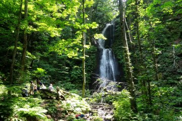 <p>The forest scenery is punctuated by several waterfalls</p>
