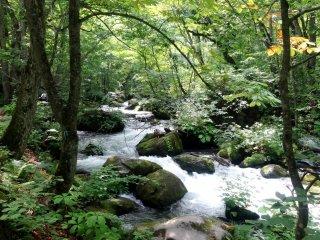 Musim panas yang hijau akan berubah menjadi dedaunan gugur yang cantik sekitar pertengahan hingga akhir Oktober