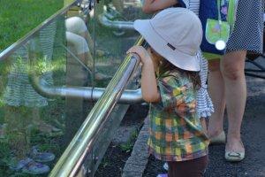 เด็กที่มาชมสวนสัตว์