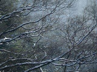 Sun shine melting snow on trees