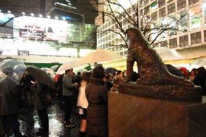 ฮาจิโกะนั่งมองทางออกสถานีชิบูย่าไม่วางตาเลยจริงๆ