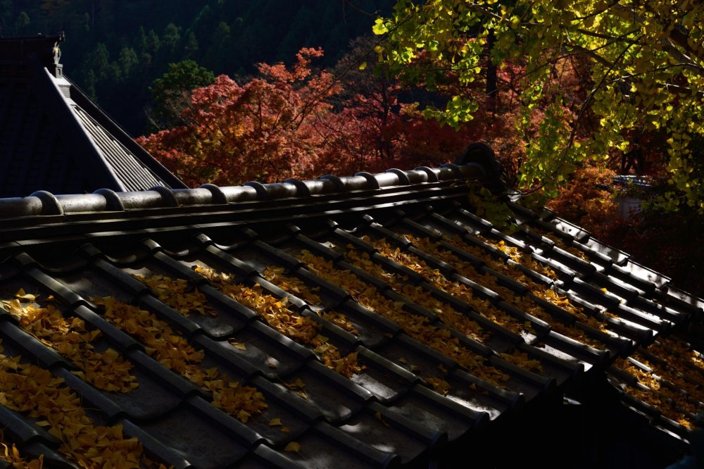 地面や屋根も秋色になっていく