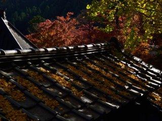 И земля, и крыши меняют цвет вслед за осенью