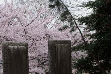 A visit during the cherry blossom season is truly beautiful.