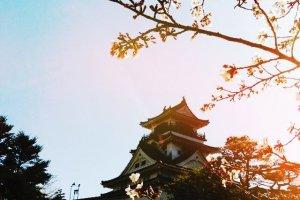 Kochi Castle in Sakura