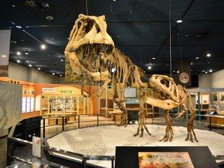 暴龍和異特龍的骨頭在館內展出