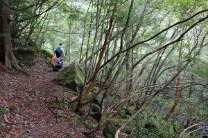 Along the Suigen no Mori Hiking Trail