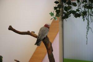 Попугай приветствует посетителей зоопарка