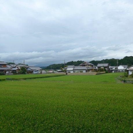 Using the Kintetsu Rail Pass