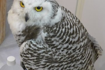 <p>Some are quite big and have interesting markings.&nbsp;</p>
