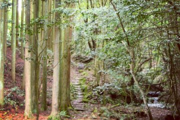 Seseragi trail