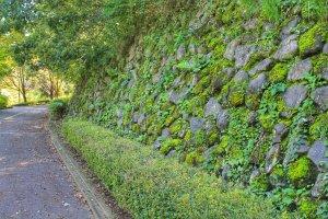 Berjalan di sepanjang batu berlumut dan pakis