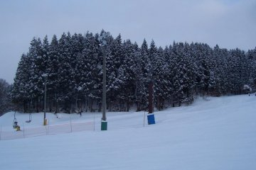 Lovely frozen trees...