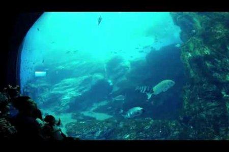 พิพิธภัณฑ์สัตว์น้ำเซนได อุมิโนะ-โมะริ