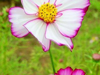 그 꽃들 중 몇몇은 다소 독특한 색을 가지고 있었다