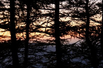 <p>A sunrise appears behind the trees</p>