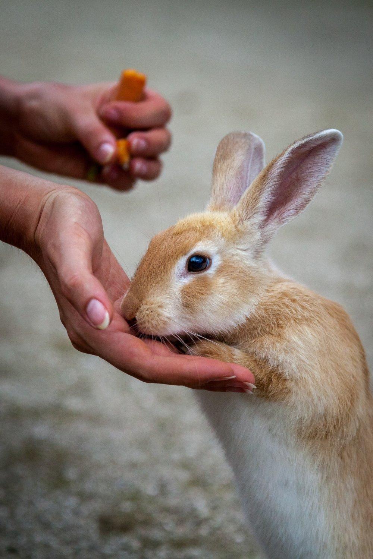 Kelinci liar yang tidak liar sama sekali
