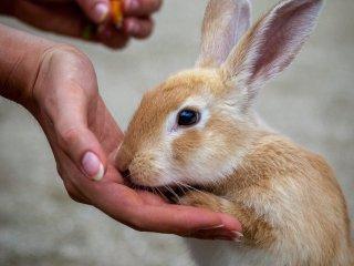 """Không chính xác là một chú thỏ """"hoang dại"""""""