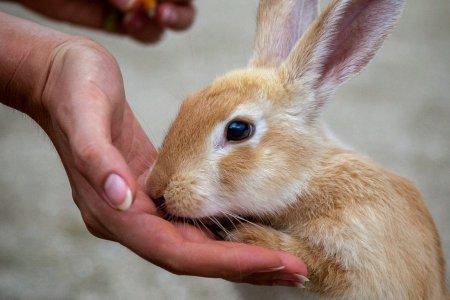 Thăm thỏ ở Okunoshima