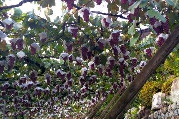 Katsunuma: Japan's Wine Country