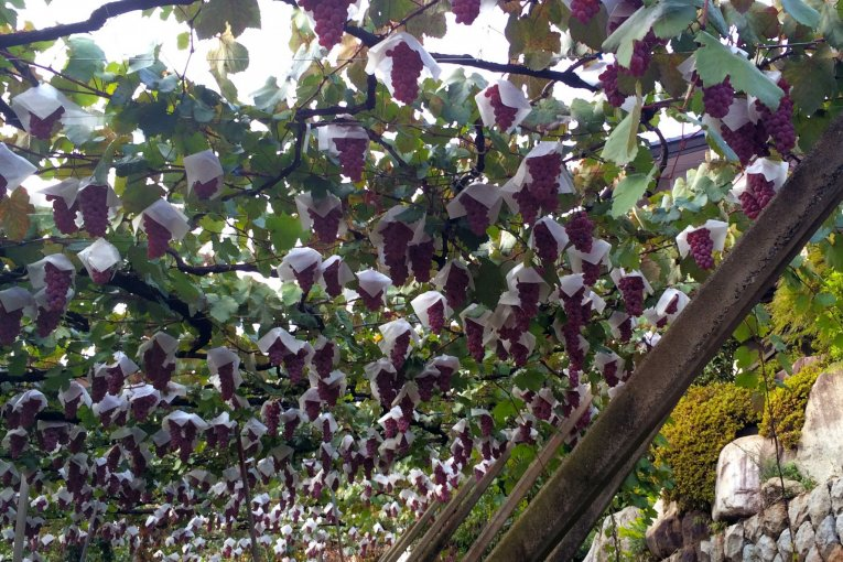 Katsunuma: Kota Wine dari Jepang