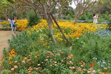 <p>Ofuna Botanical Garden</p>