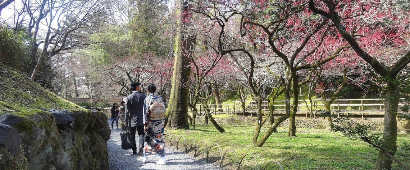 สวนพลัมอีกส่วนของศาลเจ้าคิทะโนะ เท็นมันกุ อยู่ทางด้านหลังของศาลเจ้า มีต้นพลัมเรียงรายอยู่ริมฝั่งลำธารสายเล็ก ทำให้สวนพลัมทางด้านนี้ดูสวยงามแตกต่างจากอีกด้าน ภาพต้นพลัมสีหวานกับสะพานทอดข้ามลำธารสวยจับใจ