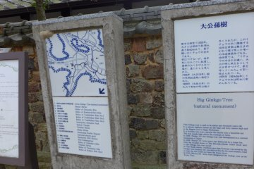 <p>The plaque describing the ginkgo tree, like others here, are also in English</p>