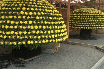 <p>A single bush with each flower individually placed like a mushroom.</p>