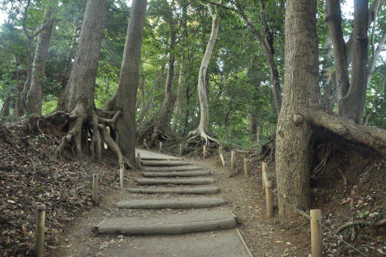 Climbing Mt Takao