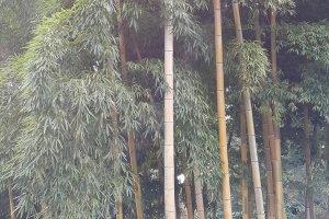 하늘 높이 꼿꼿하게 치솟은 대나무 숲이 군데군데 아담하게 자리하고 있다.