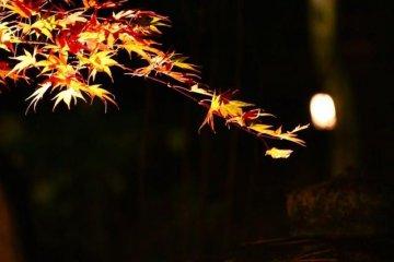 งานประดับไฟฤดูใบไม้ร่วงที่ Akiu