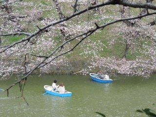 Barques et cerisiers