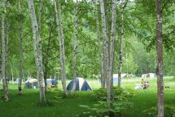 <p>Tents at the Dream Campsite</p>