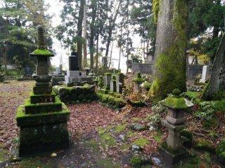 Повсюду опавшие листья и мох