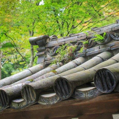 The Gardens of Zuiho-ji