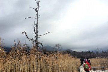 Đầm lầy Senjogahara ở Nikko
